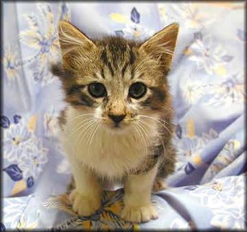 Fritz the Cat as a baby