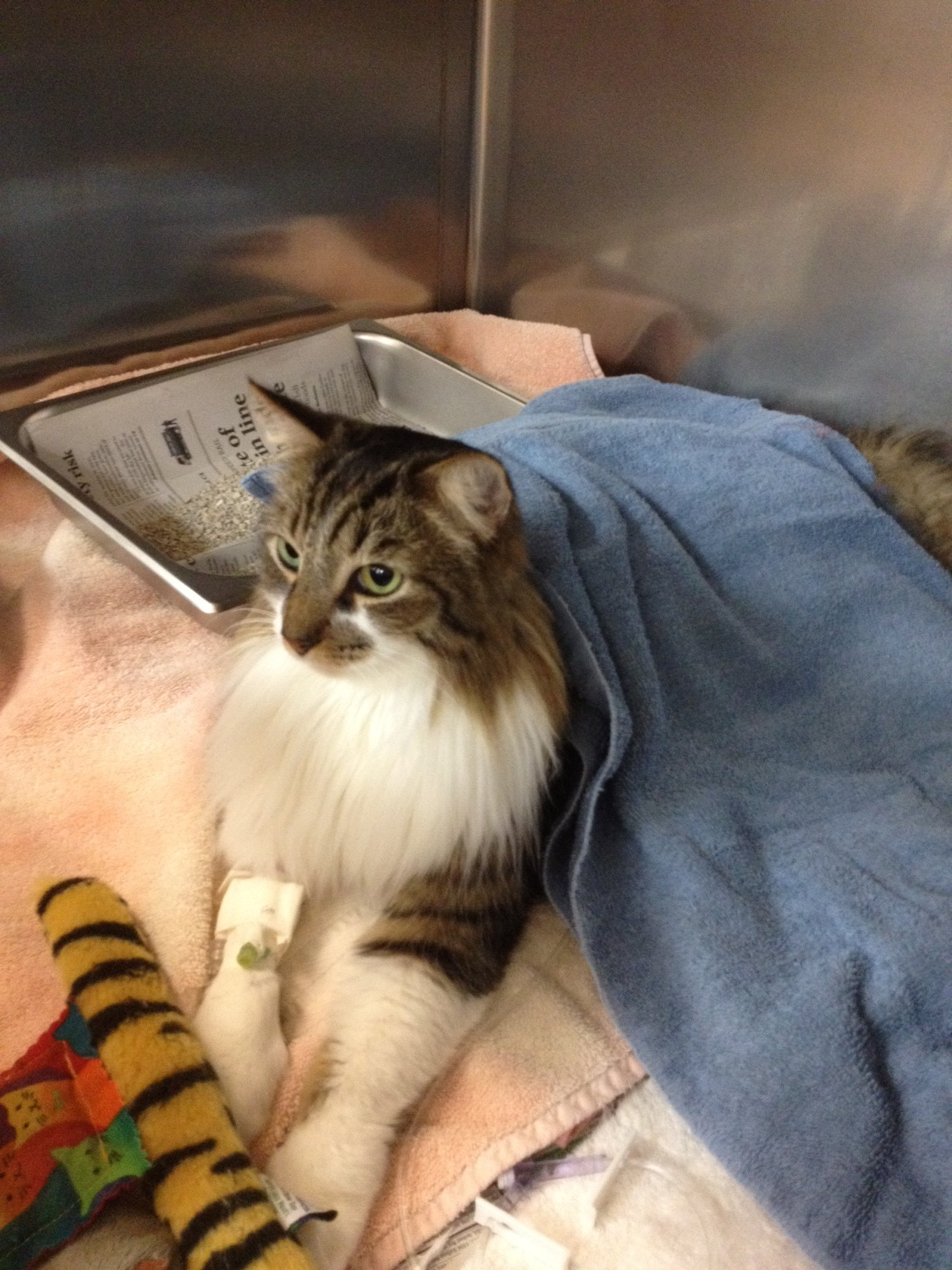 Fritz the Cat Miracles of Healing Continue!